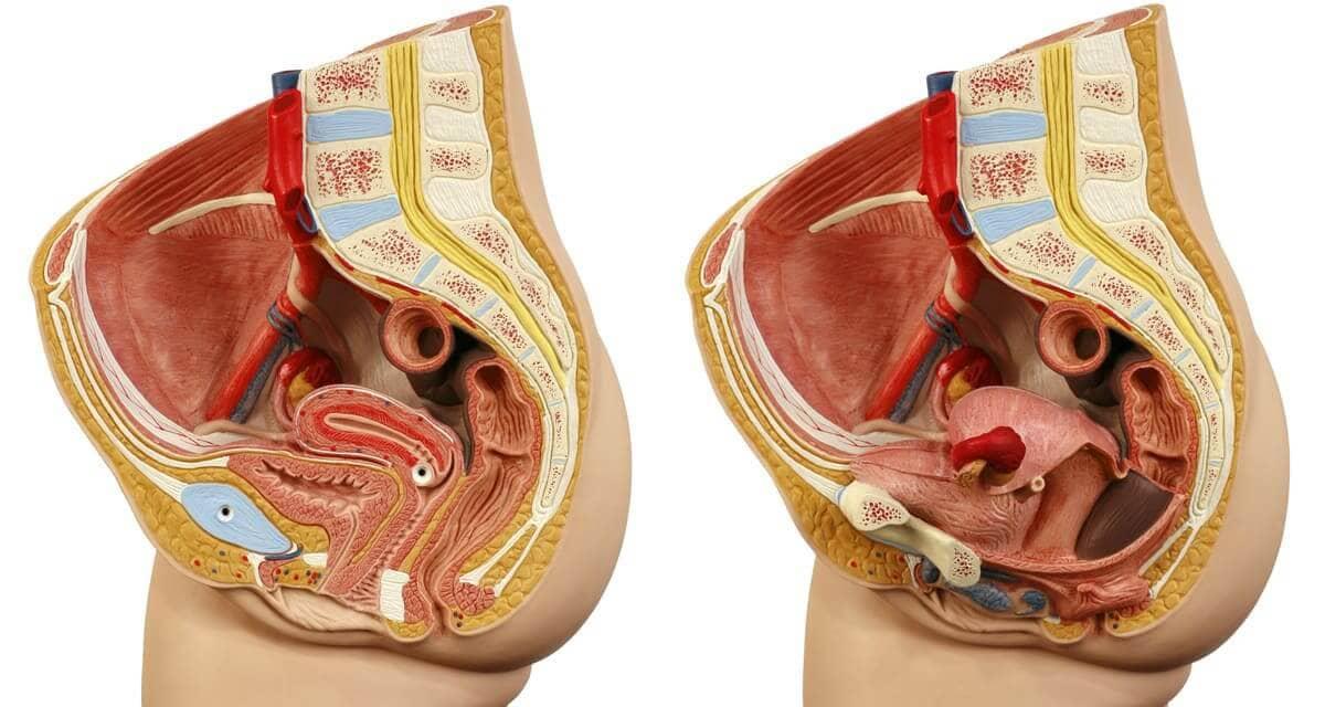 女性器周りの断片図